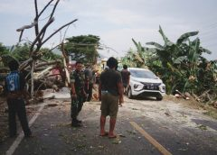 Waspada Pohon Tumbang, Bupati Luwu Pantau Jalur Trans Sulawesi